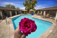 Rose Pool