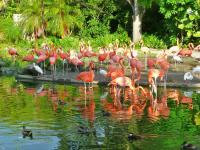 Flamingos Zoo Miami