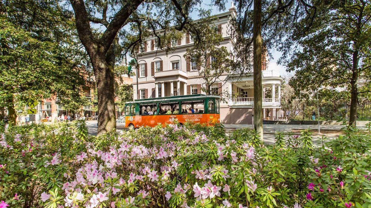 Savannah in Spring