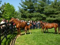 Lex Horse Farm Tour